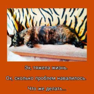 Мемы про кошек