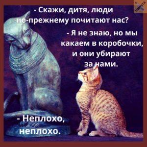 Мемы приколы про кошек