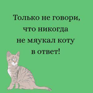 Мемы про кошек и людей