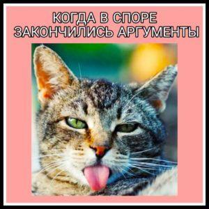 Порция юмора - мемы про котов и кошек, про спор и людей