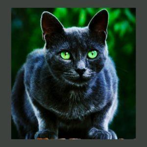 Интересные факты о животных, о кошках