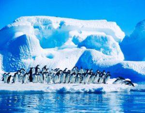 Антарктида состоит из 99% льда