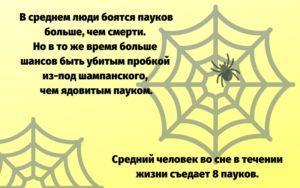 Интересные факты о людях и пауках