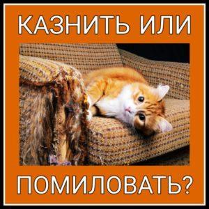 Мем-коллекция - кот подрал кресло