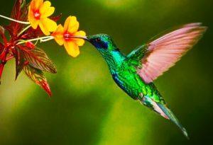 Интересные факты о птицах колибри