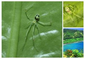 Интересные насекомые -паук, который смеётся