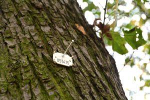 Интересное о мире - нумерация деревьев в Германии