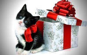Список подарков на день рождения и любой праздник