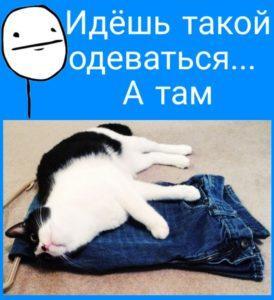 Шутки в картинках - приколы про кошек