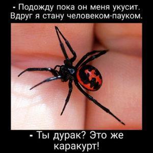 Приколы про пауков - юмор в картинках