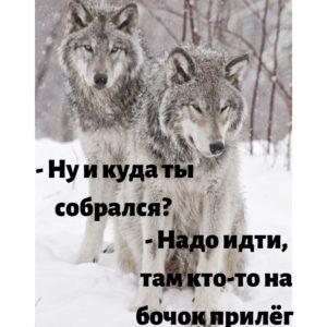 Сборник смешных картинок про волков, животных