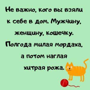 Шутки про людей и кошек, приколы, мемы